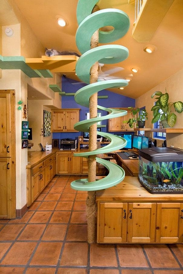 A California Man Has Created A Cat's Dream Home