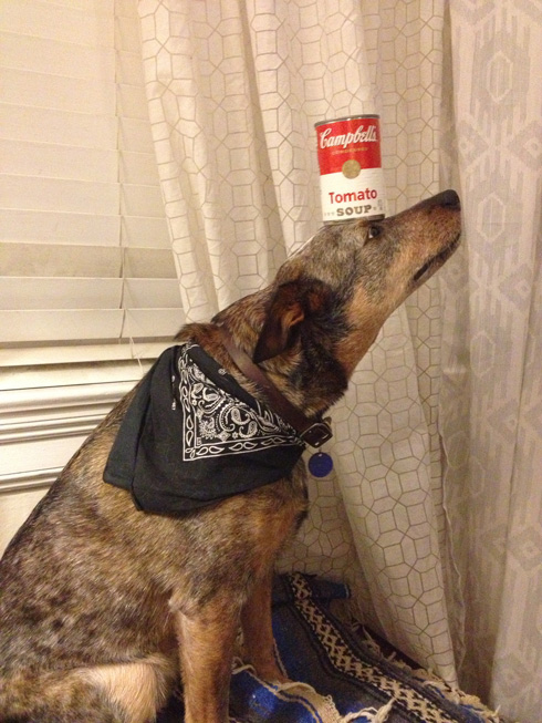 This Dog Can Stack Literally Anything On His Head