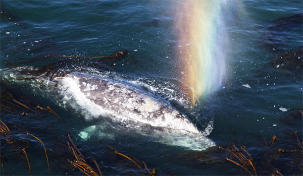 Whales Have A Little Known Secret... And It's Absolutely Amazing. Check This Out.